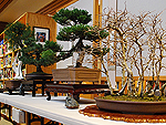 Bonsai Demonstration
