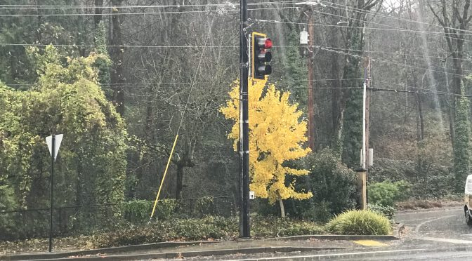 Country Club/Boones Ferry/Kerr Parkway Signal Repair Work Complete!