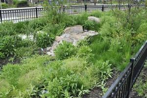 bioswale garden