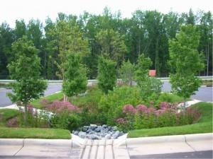 bioswale, rain garden