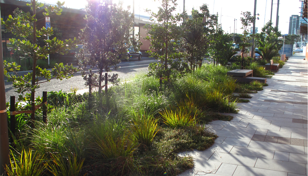 Two more swales I liked for diversity of vegetation | PAC ...