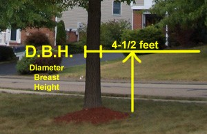 Diameter at Breast Height