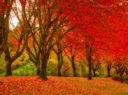 First Place:  Fall Colors by Holly Gibson