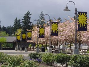 Millenium Plaza Parks Blossoming Trees photo