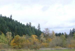 City of Lake Oswego Oregon Official Website