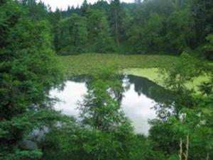 Natural Resources Pond photo