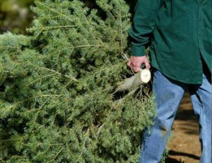 City of Lake Oswego tree recycling