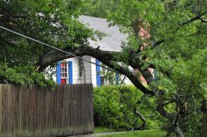 tree over power line