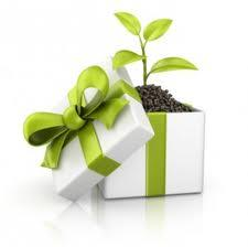 plant gift