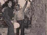 Peg Tree, 1967