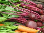 Oregon Tilth Beets and Carrots