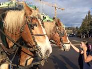 Reunion Farmers' Market & Horse Drawn Wagon Rides