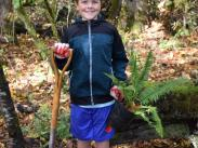 Hallinan Heights Woods Volunteers Planted 200 Ferns