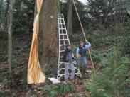 Megan Big John and Pam Peterson - Iron Mtn. Tree