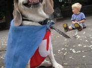 Category 1 - 2nd Place:  Dexter the Underdog at Pet Parade by Julia Cailliet