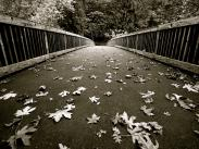 Category 2 - 1st Place:  Footbridge at George Rogers Park by Haven Seagraves