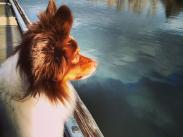Category 5 – Pets, 2nd Place:  River Dreamer by Susan Mann