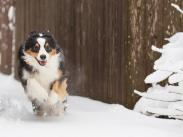 Category 5 - Second Place: Snow Day by Erik Graham