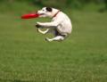 #DogsofLO Contest!