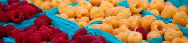 Lake Oswego Farmers Market berries