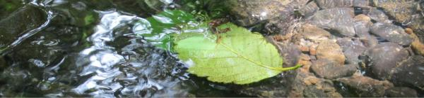 Water Quality leaf