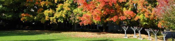Evergreen fall