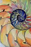 Abstract Shell Image