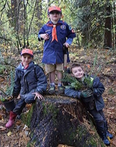 Boy Scouts Planting