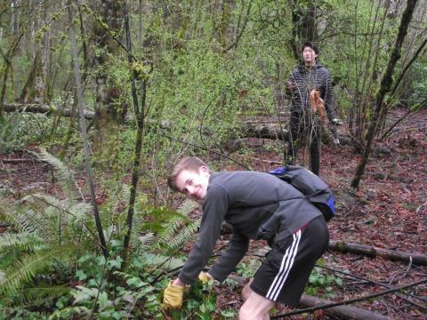 Lake Oswego High Schoolers Remove Invasives
