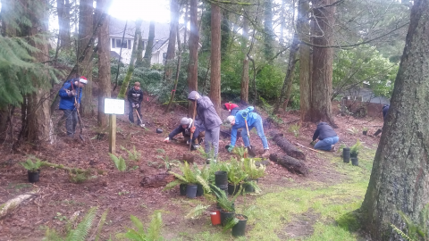 Volunteers Actively Planting