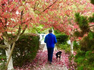 Person walking dog on sidewalk