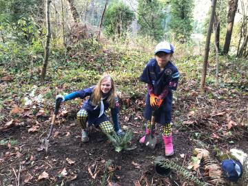 Scouts planting ferns