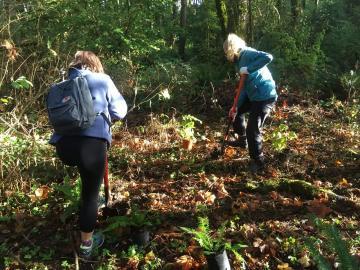 Springbrook Park Native Species Planting