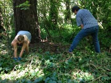 Removing ivy
