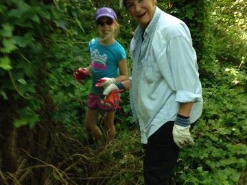 Volunteers Pulling Ivy
